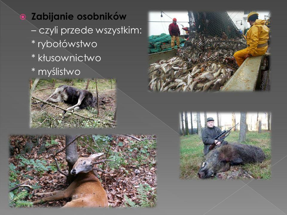  Zabijanie osobników – czyli przede wszystkim: * rybołówstwo * kłusownictwo * myślistwo