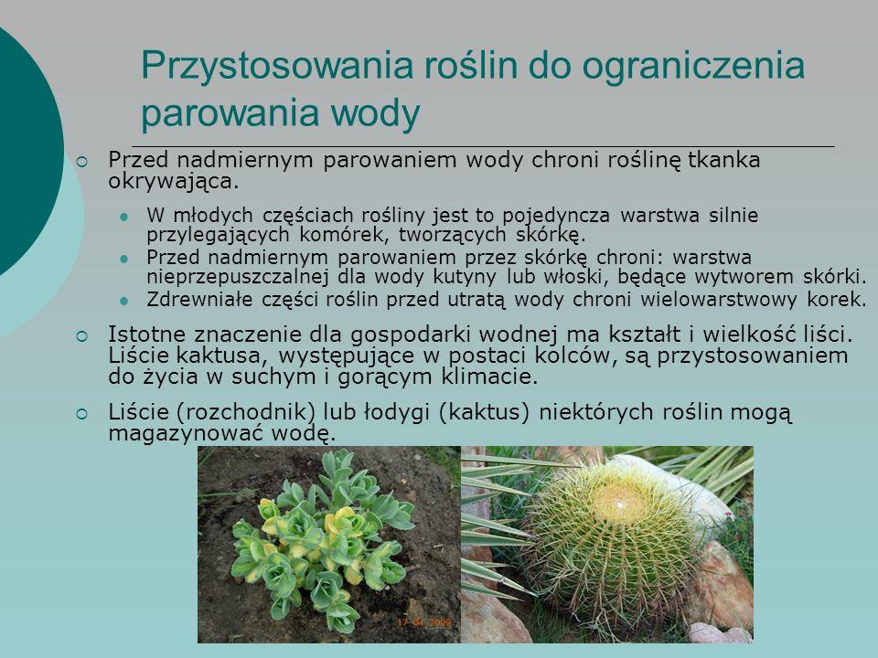 Przystosowania roślin do ograniczenia parowania wody  Przed nadmiernym parowaniem wody chroni roślinę tkanka okrywająca.