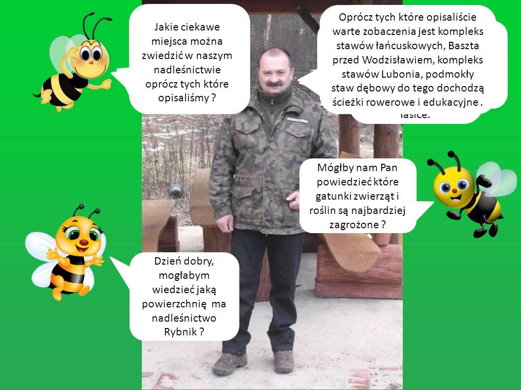A teraz zadamy parę pytań leśniczemu z naszego nadleśnictwa Panu Tomaszowi Majerowi.