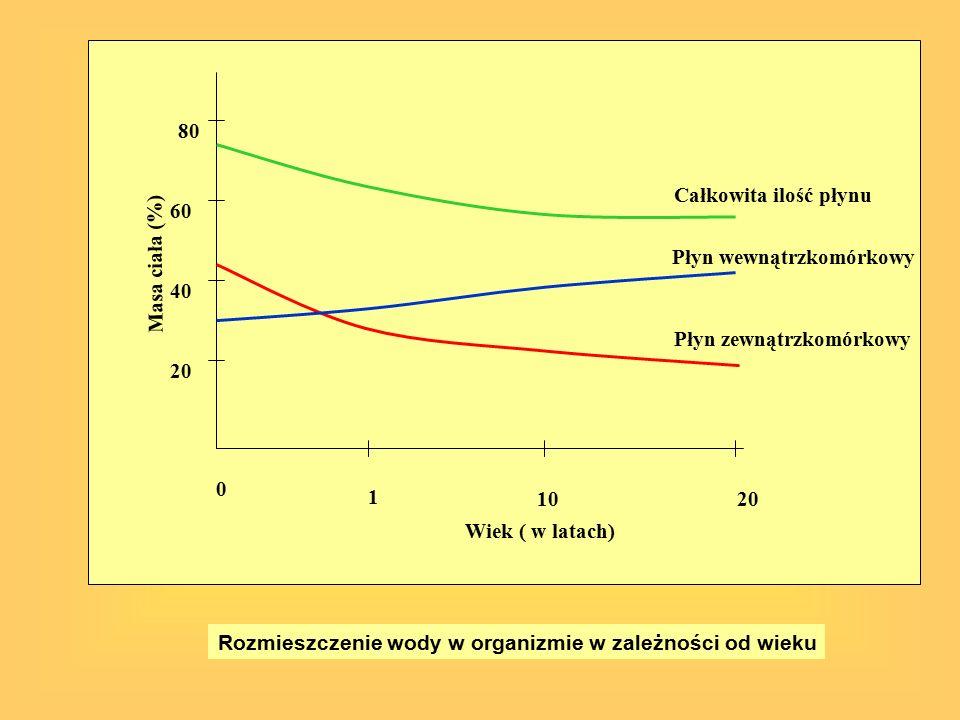 20 40 60 80 0 1 1020 Wiek ( w latach) Masa ciała (%) Rozmieszczenie wody w organizmie w zależności od wieku Całkowita ilość płynu Płyn wewnątrzkomórko
