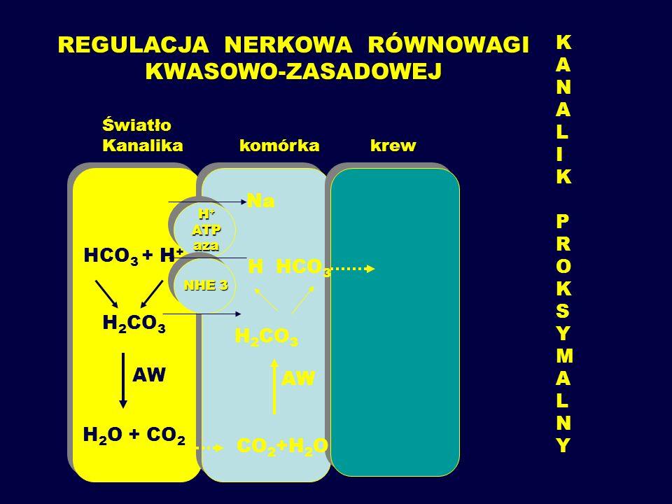 2.Drogą oddechową a.spadek wentylacji pęcherzyków płucnych – CO 2 nie jest prawidłowo wydalany przez płuca b.