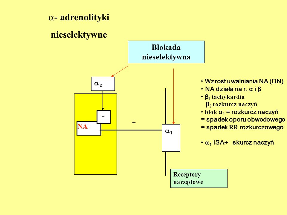 Nieselektywni antagoniści receptora α ( α 1 i α 2 ) Leki naturalne alkaloidy sporyszu Naturalne alkaloidy wielko-cząsteczkowe ERGOTAMINA Naturalne alkaloidy mało-cząsteczkowe ERGOMETRYNA Pochodne półsyntetyczne DIHYDROERGOTAMINA Pochodna syntetyczna NICERGOLINA Leki syntetyczne TOLAZOLINA, FENTOLAMINA, FENOKSYBENZAMINA