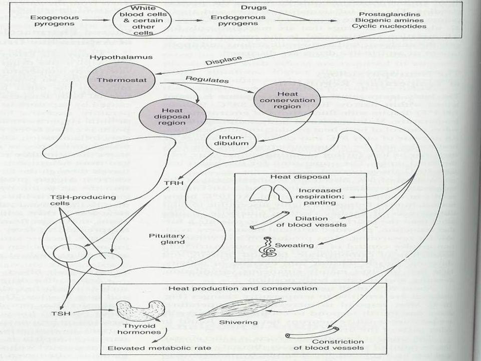 Padaczki u dzieci Idiopatyczne Objawowe Kryptogenne