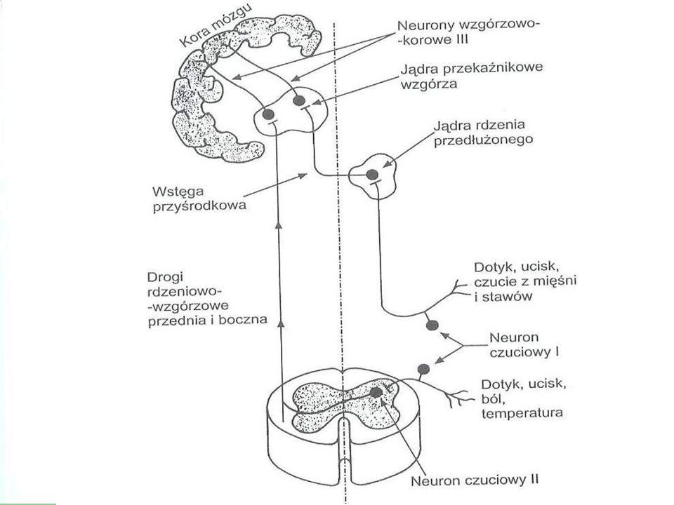 Plan Mózgowe porażenie dziecięce Stany napadowe, drgawki gorączkowe Bóle głowy Szczepienia