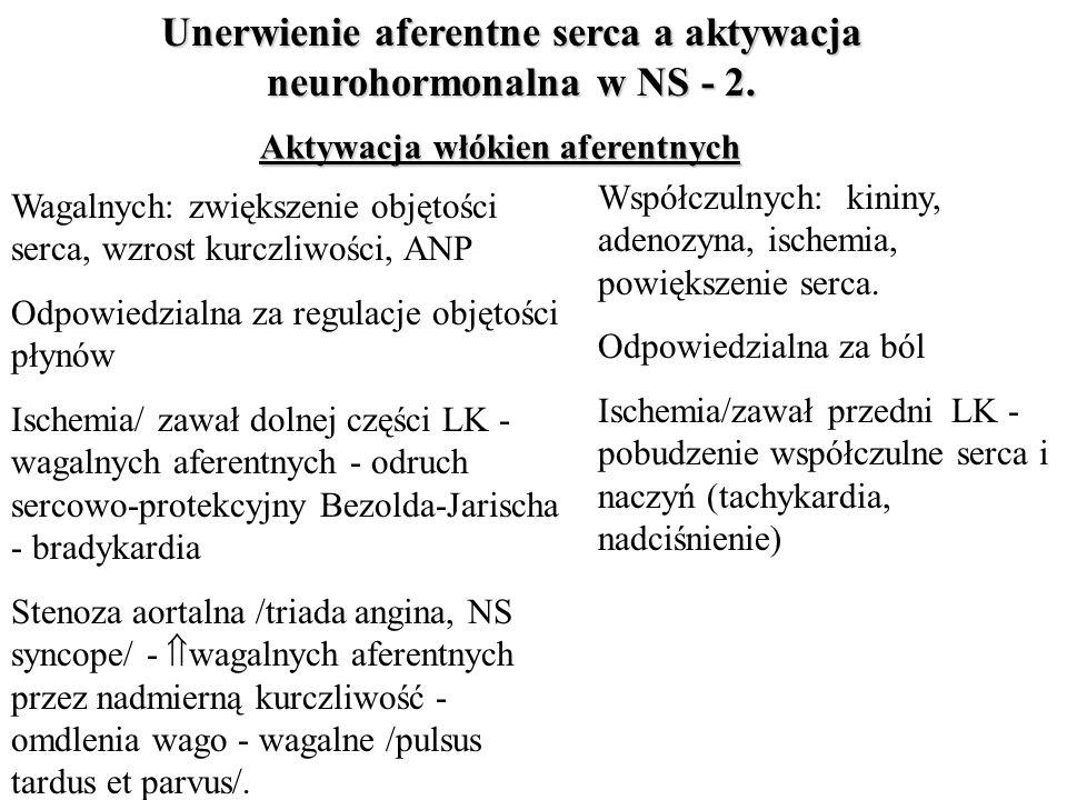 Unerwienie aferentne serca a aktywacja neurohormonalna w NS - 2. Aktywacja włókien aferentnych Współczulnych: kininy, adenozyna, ischemia, powiększeni