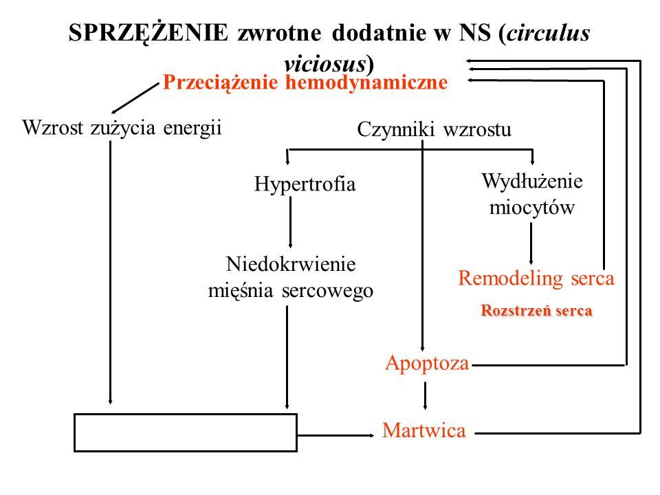 SPRZĘŻENIE zwrotne dodatnie w NS (circulus viciosus) Przeciążenie hemodynamiczne Wzrost zużycia energii Czynniki wzrostu Niedobory energii Martwica Apoptoza Hypertrofia Niedokrwienie mięśnia sercowego Wydłużenie miocytów Remodeling serca Rozstrzeń serca