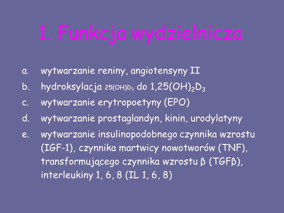 1. Funkcja wydzielnicza a.wytwarzanie reniny, angiotensyny II b.hydroksylacja 25(OH)D 3 do 1,25(OH) 2 D 3 c.wytwarzanie erytropoetyny (EPO) d.wytwarza