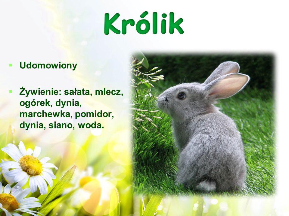 Pomyśl i odpowiedz na pytania: 1.Czym różni się życie zająca od królika.