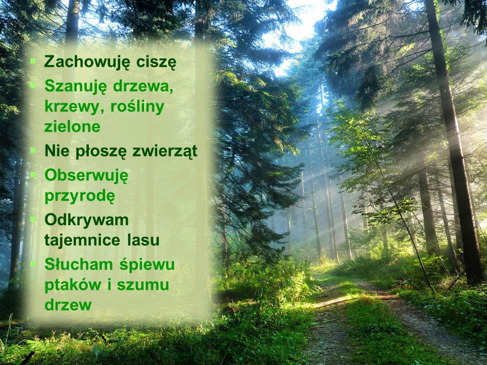   Zachowuję ciszę   Szanuję drzewa, krzewy, rośliny zielone   Nie płoszę zwierząt   Obserwuję przyrodę   Odkrywam tajemnice lasu   Słucham śpiewu ptaków i szumu drzew