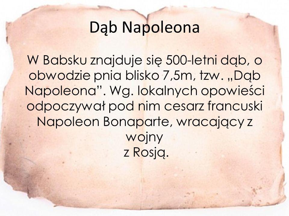 Dąb Napoleona W Babsku znajduje się 500-letni dąb, o obwodzie pnia blisko 7,5m, tzw.