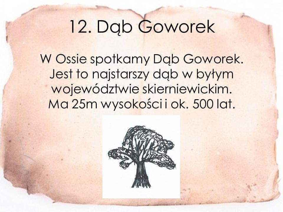 12. Dąb Goworek W Ossie spotkamy Dąb Goworek.