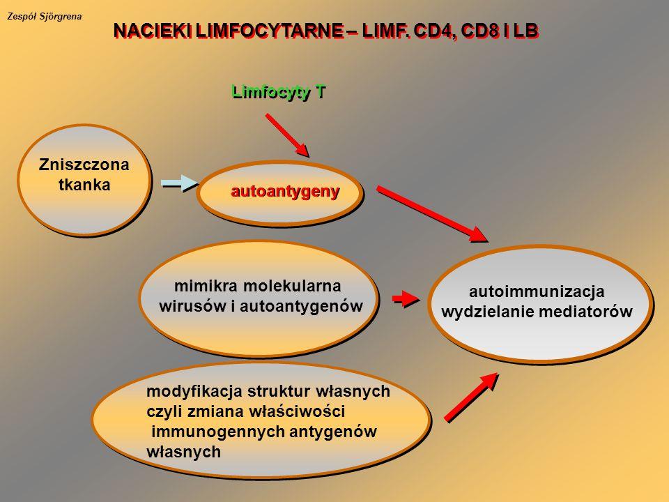 Zniszczona tkanka autoantygeny Limfocyty T autoimmunizacja wydzielanie mediatorów mimikra molekularna wirusów i autoantygenów modyfikacja struktur własnych czyli zmiana właściwości immunogennych antygenów własnych NACIEKI LIMFOCYTARNE – LIMF.