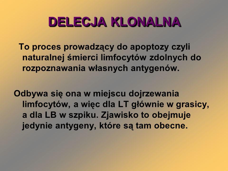DELECJA KLONALNA To proces prowadzący do apoptozy czyli naturalnej śmierci limfocytów zdolnych do rozpoznawania własnych antygenów. Odbywa się ona w m