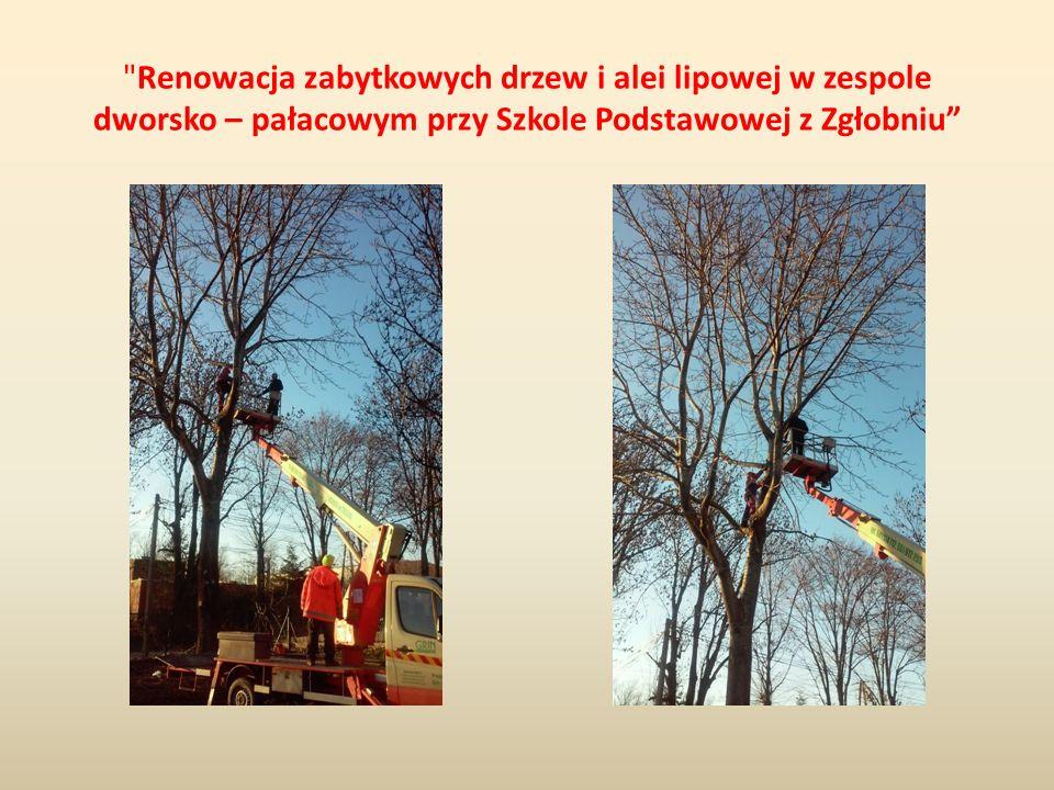 Renowacja zabytkowych drzew i alei lipowej w zespole dworsko – pałacowym przy Szkole Podstawowej z Zgłobniu