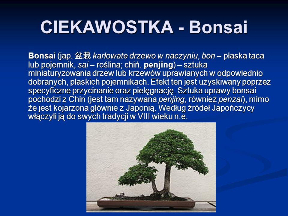 CIEKAWOSTKA - Bonsai Bonsai (jap.