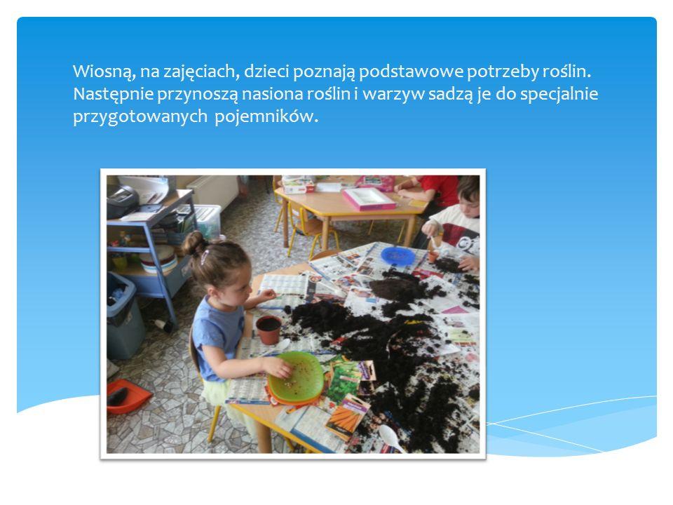 Wiosną, na zajęciach, dzieci poznają podstawowe potrzeby roślin. Następnie przynoszą nasiona roślin i warzyw sadzą je do specjalnie przygotowanych poj