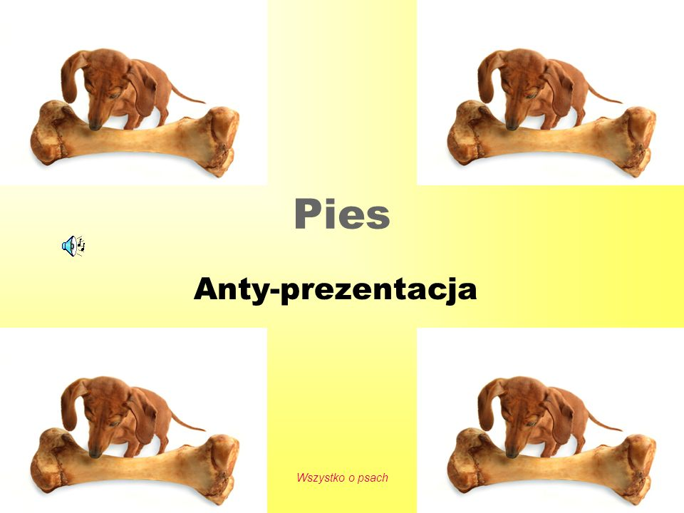 2016-05-24 Wszystko o psach 1 Pies Anty-prezentacja