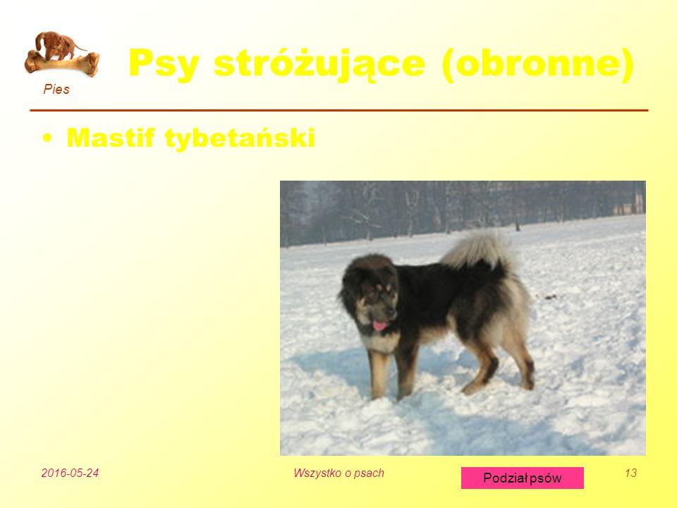 Pies Podział psów 2016-05-24Wszystko o psach13 Psy stróżujące (obronne) Mastif tybetański