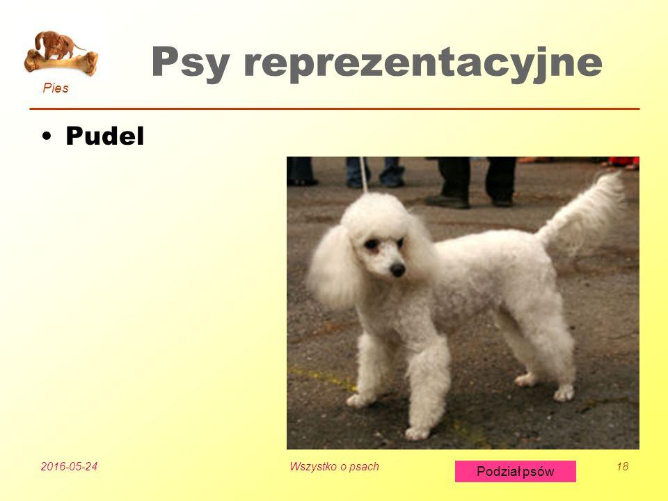 Pies Podział psów 2016-05-24Wszystko o psach18 Psy reprezentacyjne Pudel