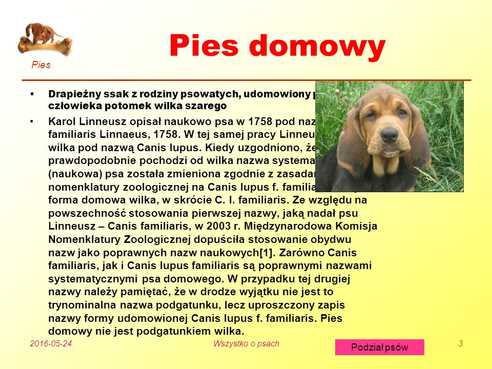 Pies Podział psów 2016-05-24Wszystko o psach3 Pies domowy Drapieżny ssak z rodziny psowatych, udomowiony przez człowieka potomek wilka szarego Karol Linneusz opisał naukowo psa w 1758 pod nazwą Canis familiaris Linnaeus, 1758.