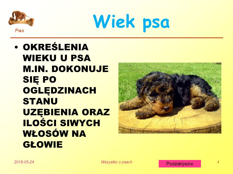 Pies Podział psów 2016-05-24Wszystko o psach4 Wiek psa OKREŚLENIA WIEKU U PSA M.IN.