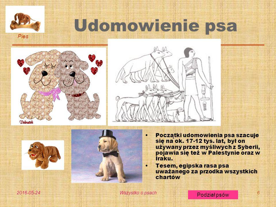 Pies Podział psów 2016-05-24Wszystko o psach7 Podział psów Pies nierasowy Psy myśliwskie Psy ratownicze Psy pasterskie Psy stróżujące (obronne) Psy służbowe Psy zaprzęgowe