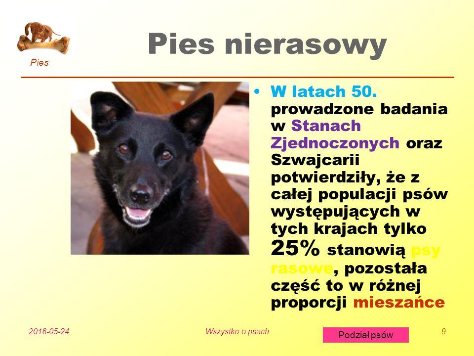 Pies Podział psów 2016-05-24Wszystko o psach9 Pies nierasowy W latach 50.