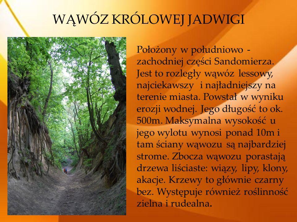 Położony w południowo - zachodniej części Sandomierza. Jest to rozległy wąwóz lessowy, najciekawszy i najładniejszy na terenie miasta. Powstał w wynik
