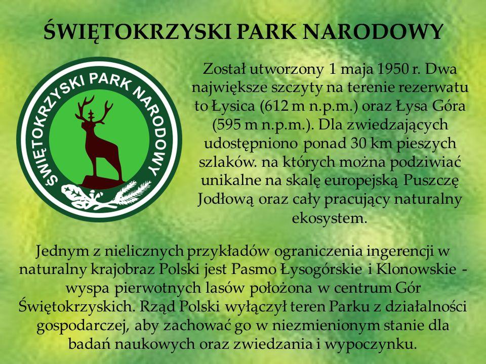 Został utworzony 1 maja 1950 r. Dwa największe szczyty na terenie rezerwatu to Łysica (612 m n.p.m.) oraz Łysa Góra (595 m n.p.m.). Dla zwiedzających