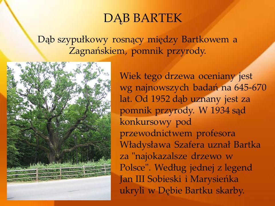 DĄB BARTEK Dąb szypułkowy rosnący między Bartkowem a Zagnańskiem, pomnik przyrody. Wiek tego drzewa oceniany jest wg najnowszych badań na 645-670 lat.