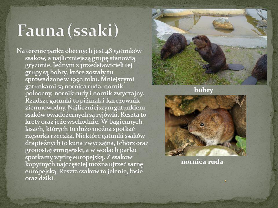 Poleski Park Narodowy jest jednym z miejsc z największą liczbą ptaków w Polsce, a jest ich aż około dwustu gatunków z czego aż sto pięćdziesiąt to gatunki lęgowe.