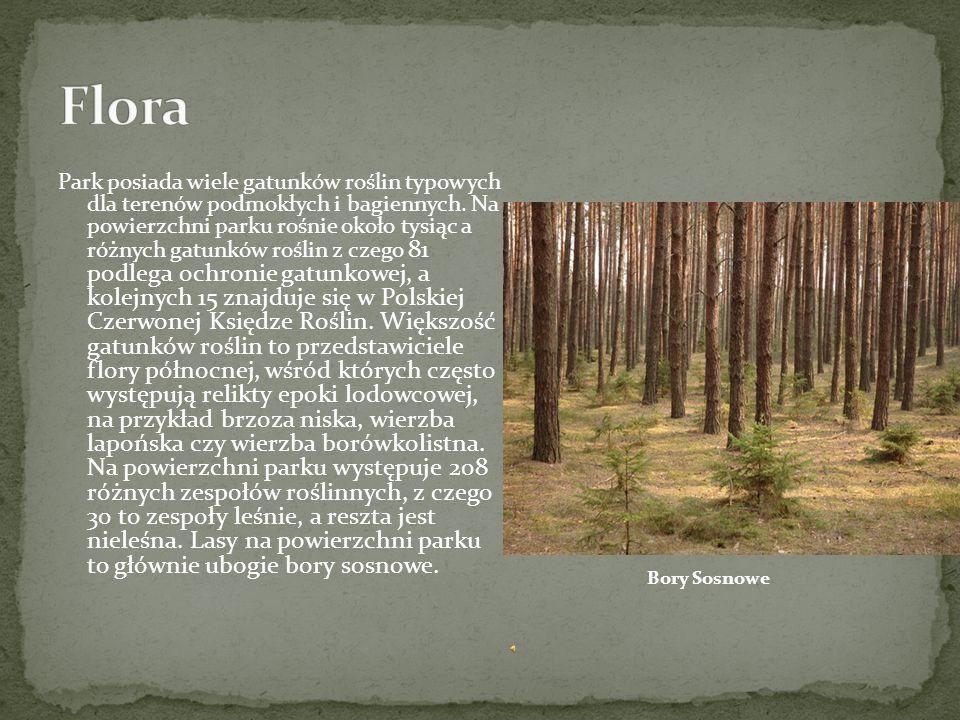 Park posiada wiele gatunków roślin typowych dla terenów podmokłych i bagiennych.