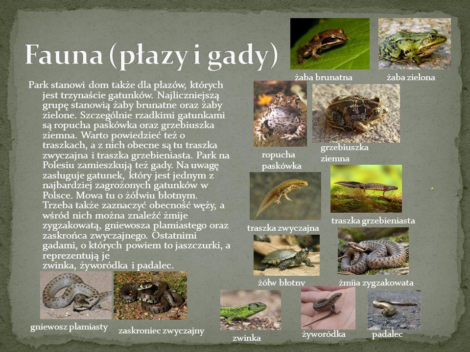 Park stanowi dom także dla płazów, których jest trzynaście gatunków.