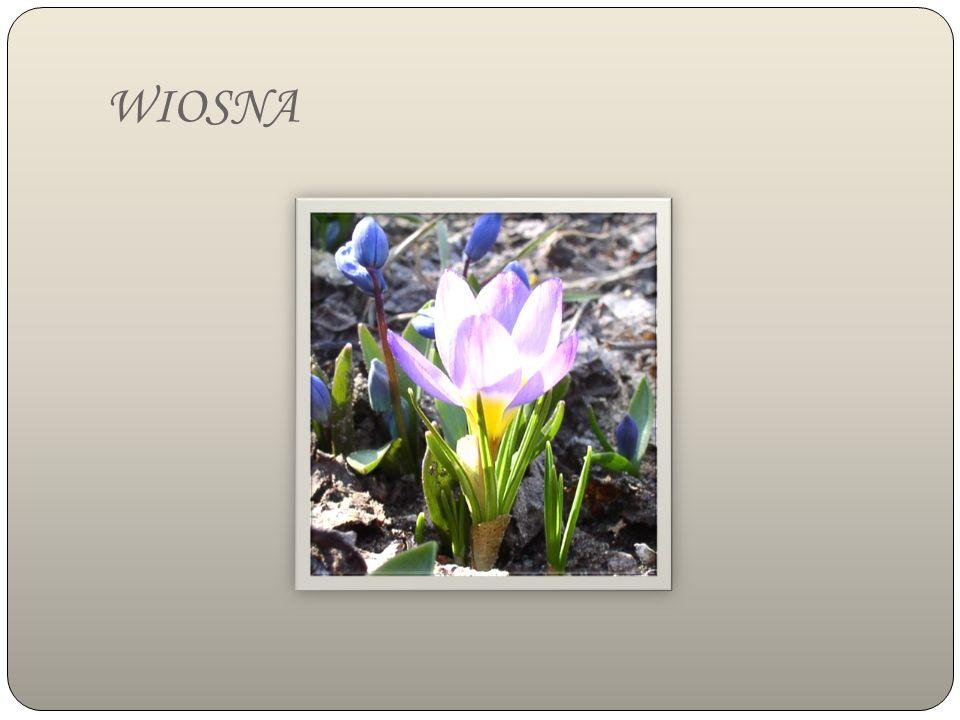 Powracające do Polski bociany są zwiastunem nadchodzącej wiosny.