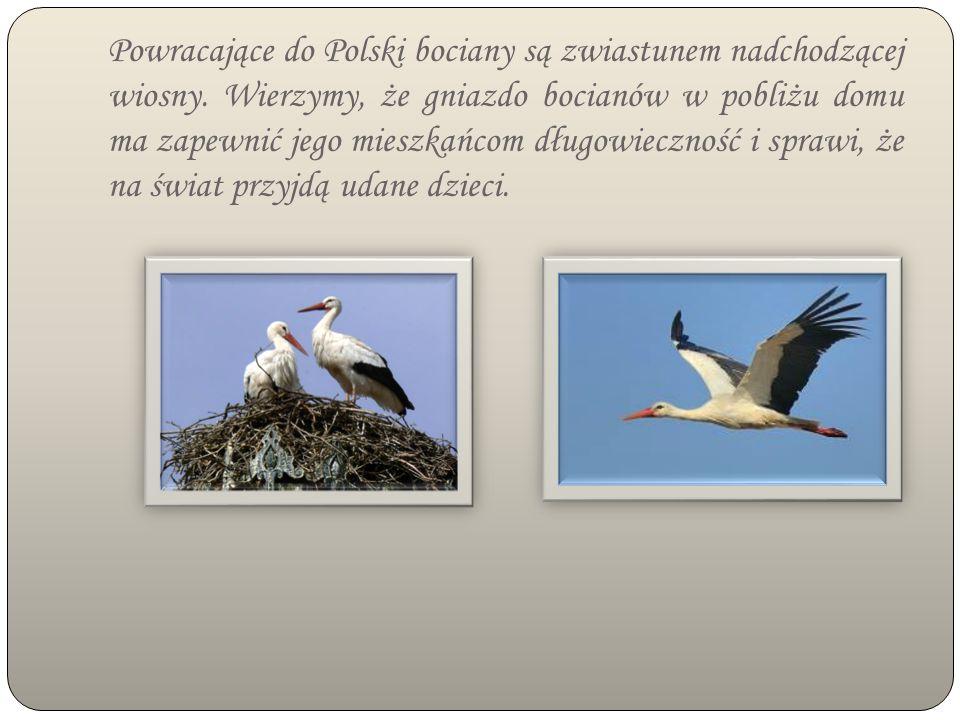WIGILIA BOŻEGO NARODZENIA Wieczerza wigilijna jest wielką uroczystością, która w całej Polsce rozpoczyna się o podobnej porze.