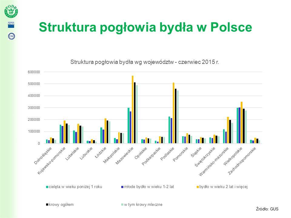Struktura pogłowia bydła w Polsce Źródło: GUS