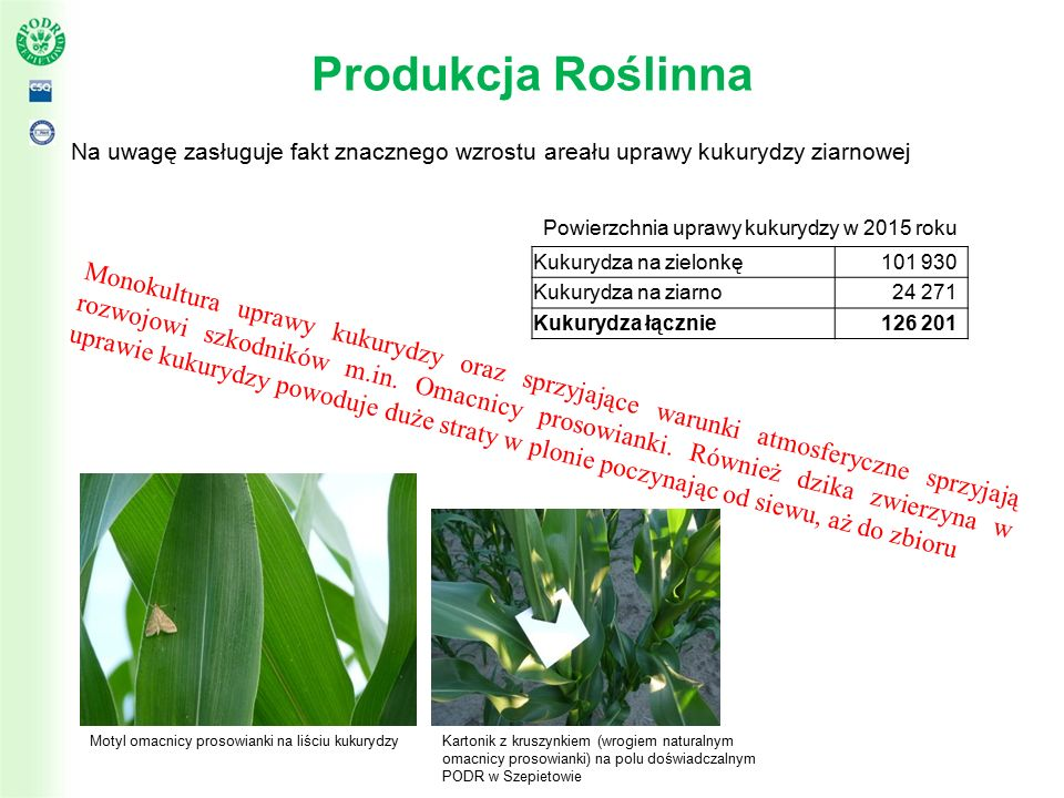 Produkcja Roślinna Na uwagę zasługuje fakt znacznego wzrostu areału uprawy kukurydzy ziarnowej Powierzchnia uprawy kukurydzy w 2015 roku Monokultura uprawy kukurydzy oraz sprzyjające warunki atmosferyczne sprzyjają rozwojowi szkodników m.in.