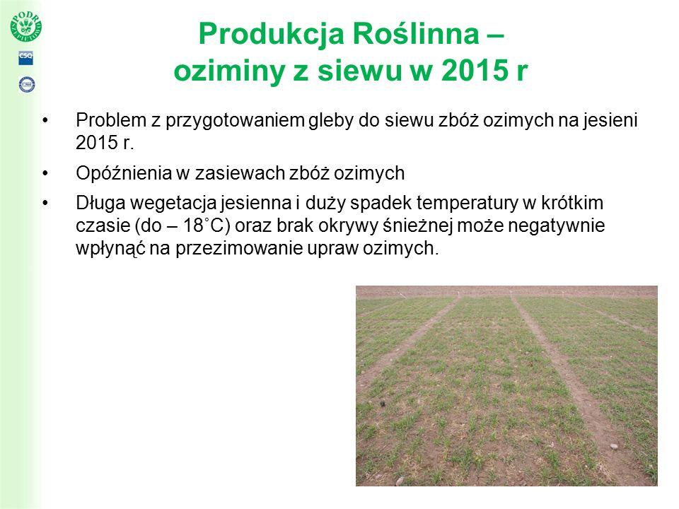 Przekrój terytorialny pogłowia bydła w Polsce