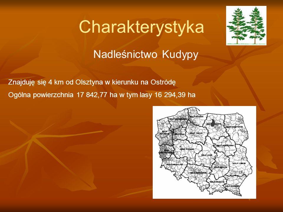 Charakterystyka Nadleśnictwo Kudypy Znajduję się 4 km od Olsztyna w kierunku na Ostródę Ogólna powierzchnia 17 842,77 ha w tym lasy 16 294,39 ha