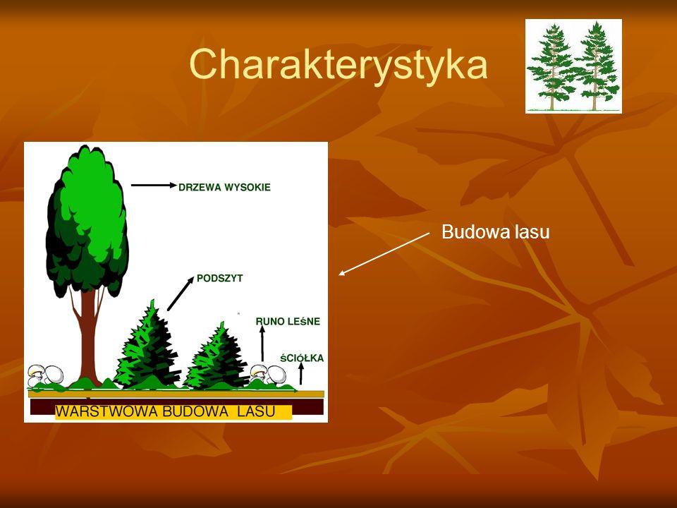 Charakterystyka Budowa lasu