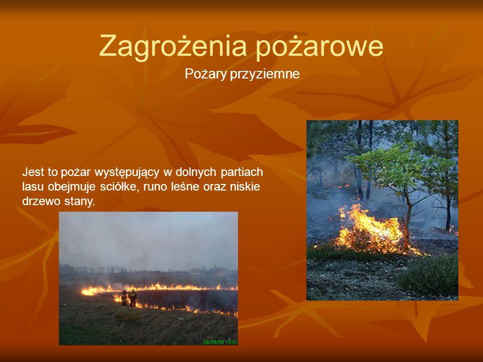 Zagrożenia pożarowe Pożary przyziemne Jest to pożar występujący w dolnych partiach lasu obejmuje sciółke, runo leśne oraz niskie drzewo stany.