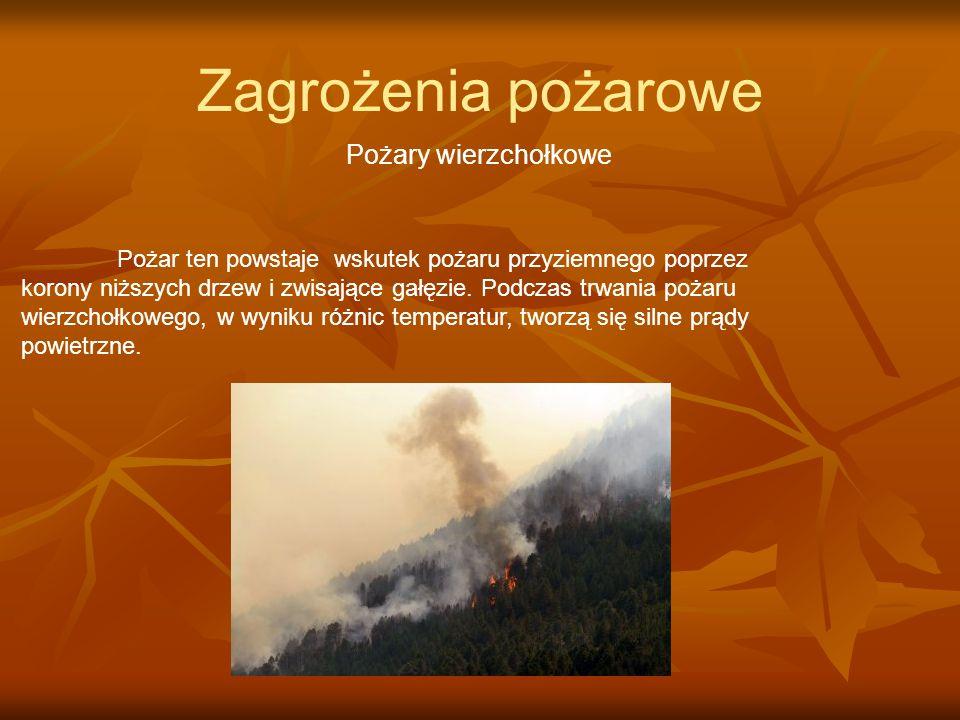 Zagrożenia pożarowe Pożary wierzchołkowe Pożar ten powstaje wskutek pożaru przyziemnego poprzez korony niższych drzew i zwisające gałęzie. Podczas trw
