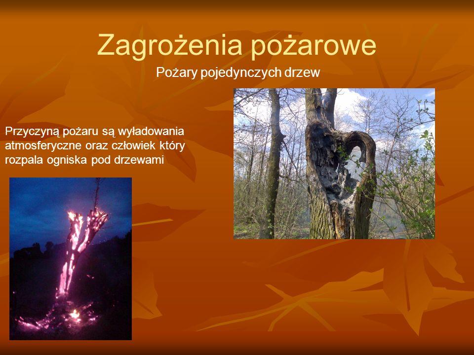 Zagrożenia pożarowe Pożary pojedynczych drzew Przyczyną pożaru są wyładowania atmosferyczne oraz człowiek który rozpala ogniska pod drzewami