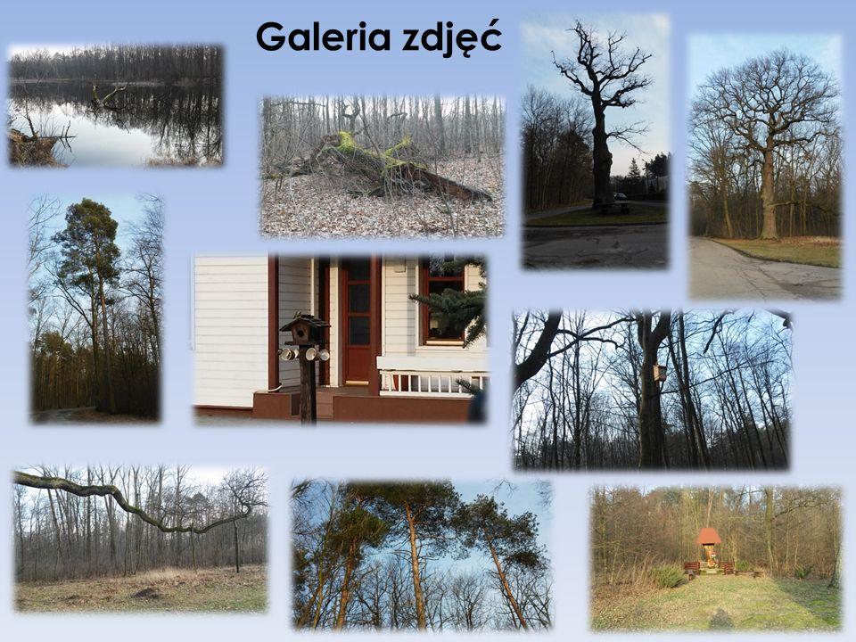 """Zespół Przyrodniczo – Krajobrazowy """"Zwierzyniec Królewski Utworzony w 1994 roku, zajmuje powierzchnię 572,32 ha."""