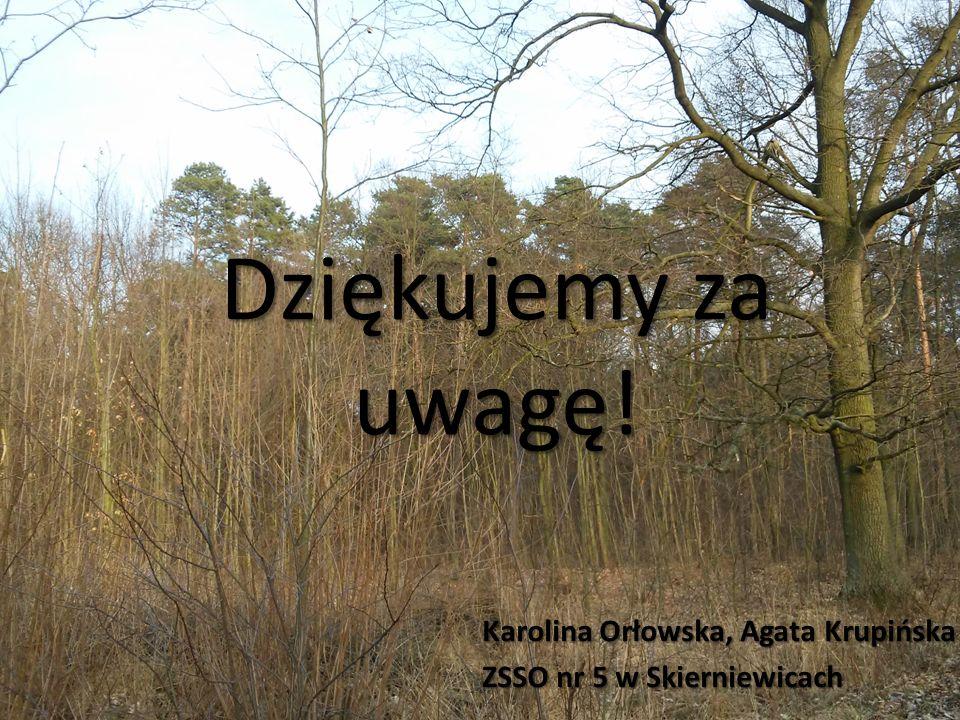 Dziękujemy za uwagę! Karolina Orłowska, Agata Krupińska ZSSO nr 5 w Skierniewicach