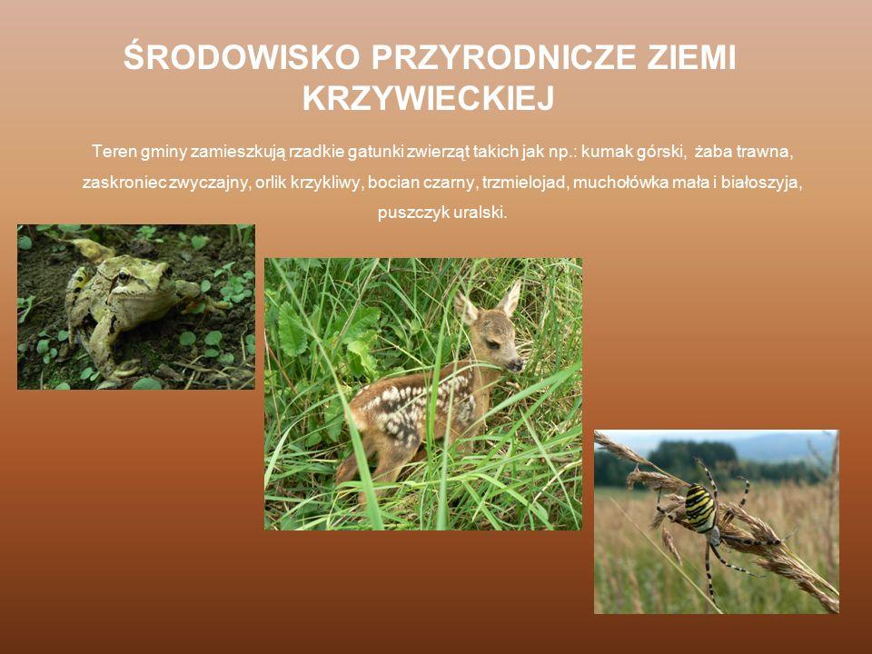 Teren gminy zamieszkują rzadkie gatunki zwierząt takich jak np.: kumak górski, żaba trawna, zaskroniec zwyczajny, orlik krzykliwy, bocian czarny, trzm
