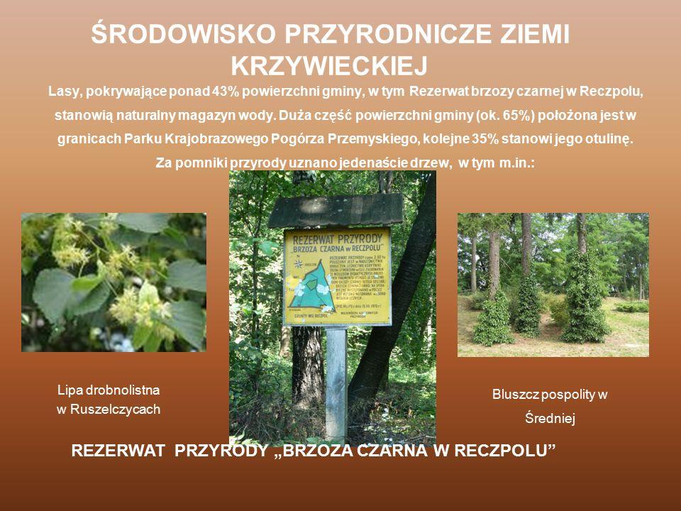 Lasy, pokrywające ponad 43% powierzchni gminy, w tym Rezerwat brzozy czarnej w Reczpolu, stanowią naturalny magazyn wody. Duża część powierzchni gminy