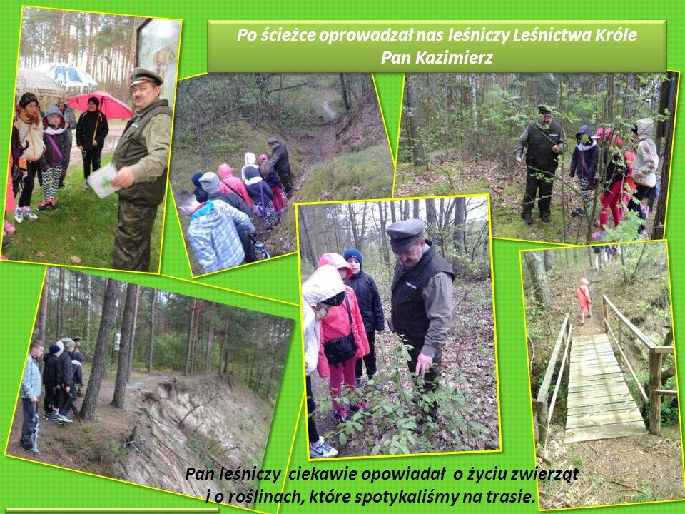 Po ścieżce oprowadzał nas leśniczy Leśnictwa Króle Pan Kazimierz Po ścieżce oprowadzał nas leśniczy Leśnictwa Króle Pan Kazimierz Pan leśniczy ciekawie opowiadał o życiu zwierząt i o roślinach, które spotykaliśmy na trasie.