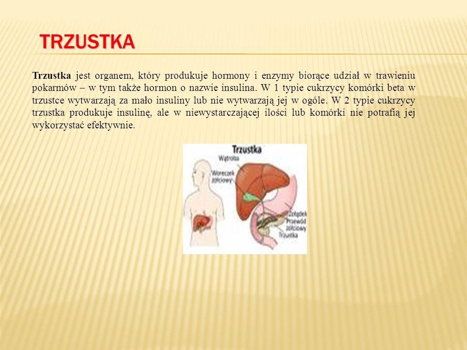 TRZUSTKA Trzustka jest organem, który produkuje hormony i enzymy biorące udział w trawieniu pokarmów – w tym także hormon o nazwie insulina.