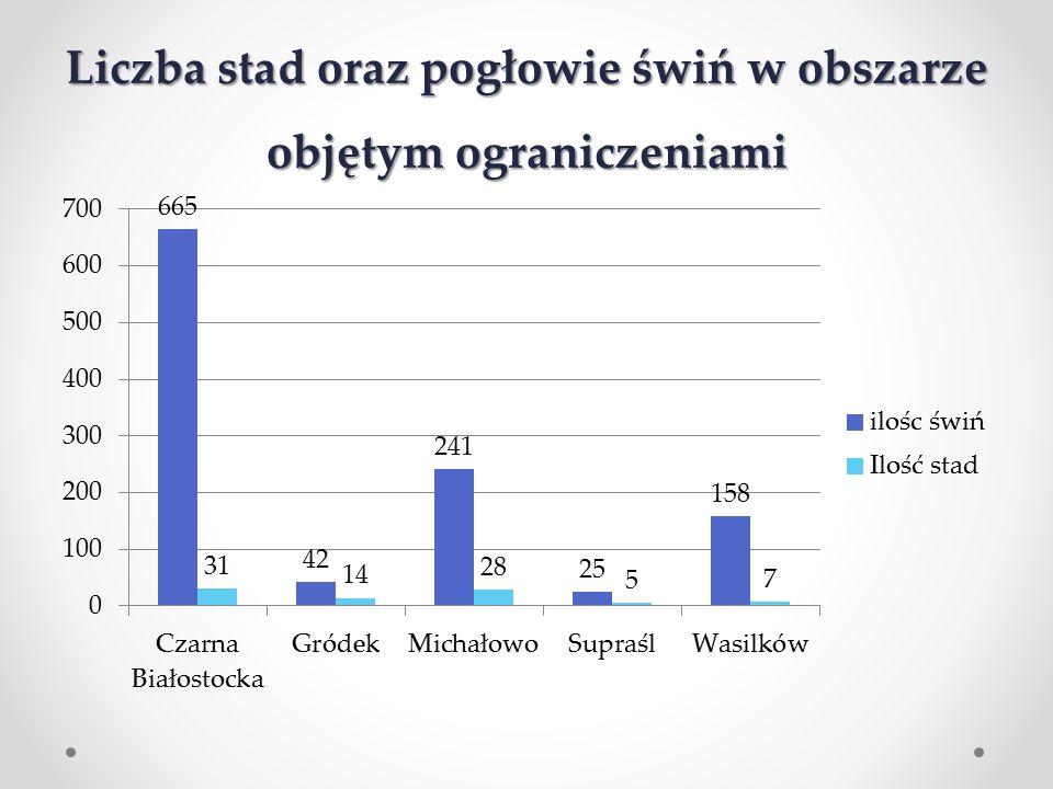 Liczba stad oraz pogłowie świń w obszarze objętym ograniczeniami